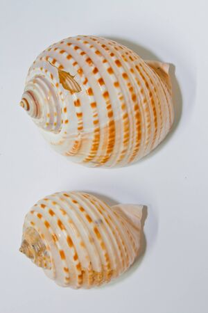 Shell on the background  photo