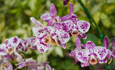 olant: Beautiful orchid
