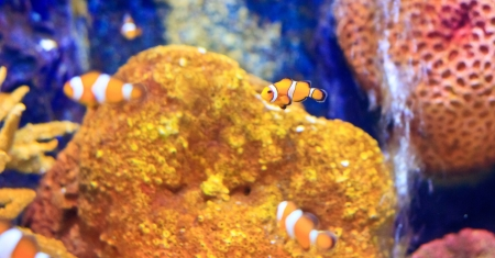 fish  in the aquarium of Rayong province,Thailand  photo