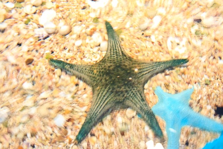 ocellaris clownfish: fish  in the aquarium of Rayong province,Thailand  Stock Photo