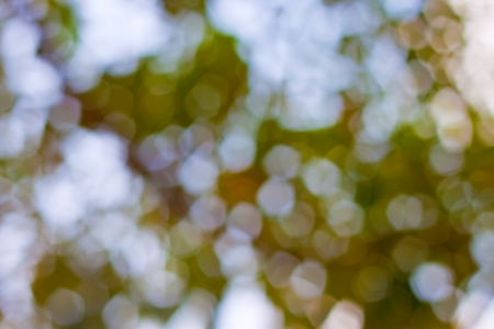 bokeh blurred out of focus background  Stock Photo - 19320892