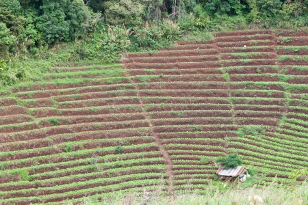 Arable farmland with fresh  at spring in thailand Stock Photo