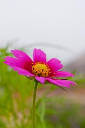 Banque d images - Fleurs d automne de diff rentes couleurs de fond floral b7e485d11c02
