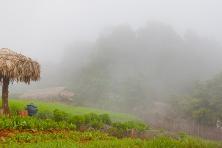 Fog in the valley  in  Chiang Mai Thailand photo