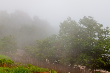 Fog in the valley  in  Chiang Mai Thailand