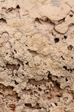 Soil of termite nests