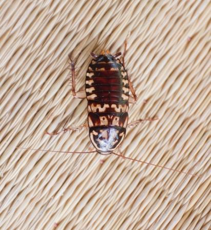 roach: Roach on canvas mat.