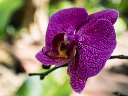 Flower species of orchids Stock Photo