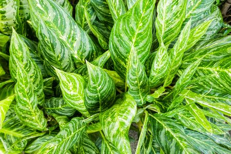 Background of leaves Reklamní fotografie