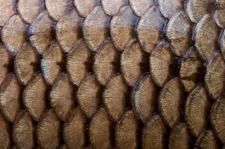 escamas de peces: escamas de pescado de textura