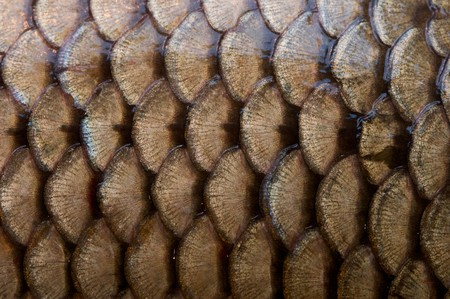 fish scales texture photo