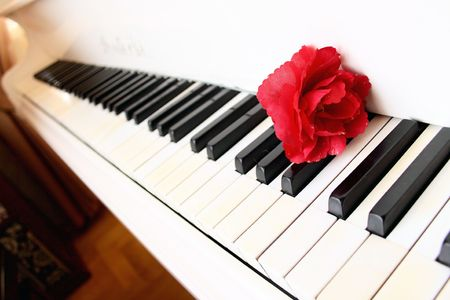 red flower on the piano keys photo