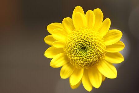 yellow flower closeup Stock Photo - 4835174