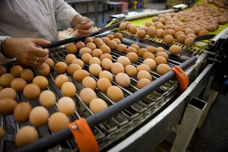 factory machine: eggs production line Stock Photo