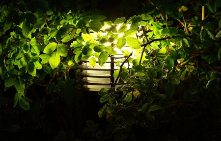 garden illumination, closeup view Stock Photo - 5698911