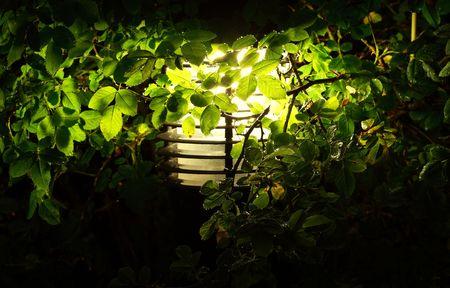 garden illumination, closeup view Stock Photo - 5698911