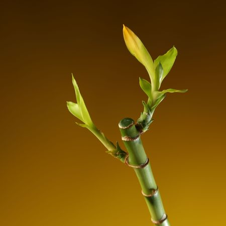 bamboo stem with foliage on brown background photo
