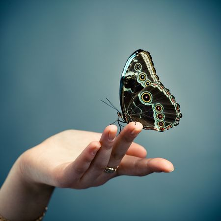 blue butterfly: butterfly on the palm, blue background
