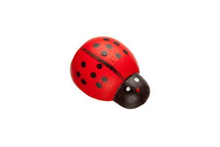 ladybug isolated photo