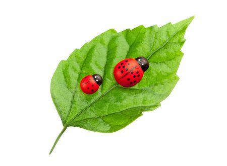 ladyfly: ladybugs on the leaf, family concept