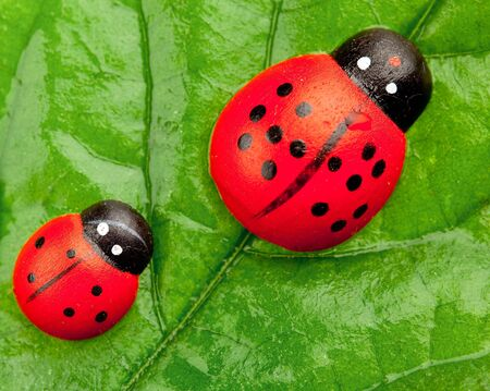 wet flies: ladybugs on the leaf, family concept