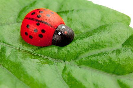 ladyfly: ladybug on the leaf