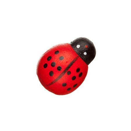 ladyfly: ladybug isolated Stock Photo