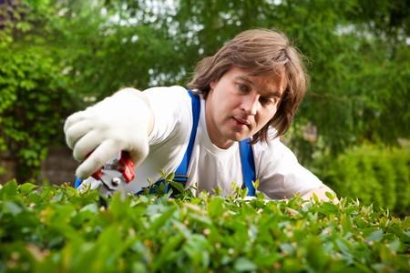 jardineros: jardinero cortar un arbusto  Foto de archivo