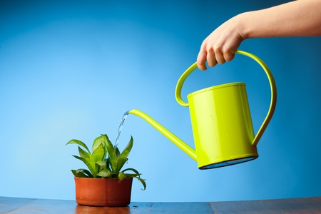 wateringcan: hand watering a plant with watering-can Stock Photo