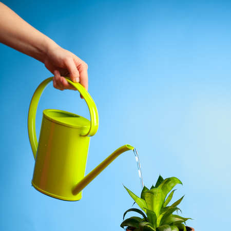 hand watering a plant with watering-can photo