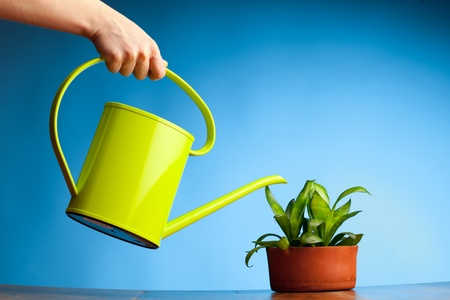 watering can: hand watering a plant with watering-can Stock Photo