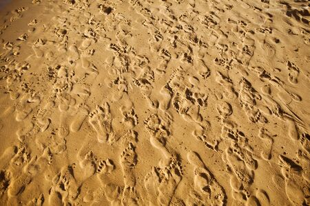 trampled: sand trampled with barefoot crowd