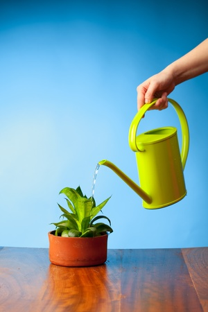 hand watering a plant with watering-can Stock Photo