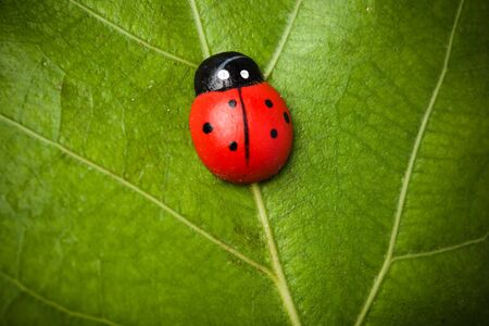 ladybug on the leaf photo