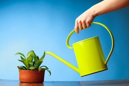 indoor plants: hand watering a plant with watering-can Stock Photo