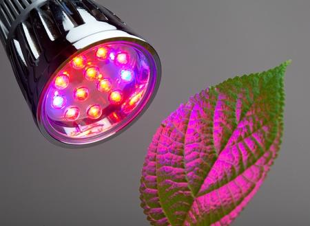 hydroponics: LED grow light
