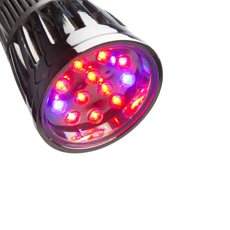 hydroponics: LED lamp for plant growing