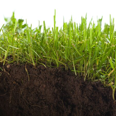 cross section: green grass with earth crosscut Stock Photo