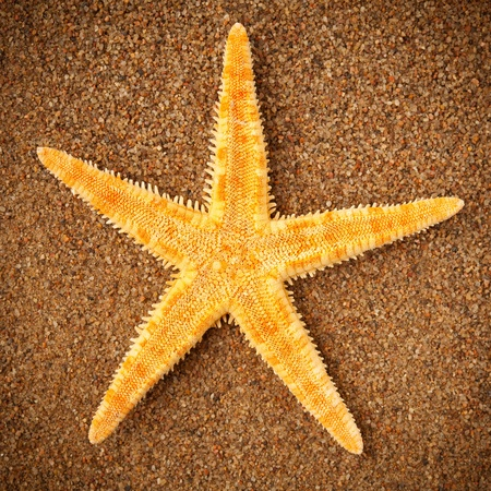 starfish or sea star on the sand photo