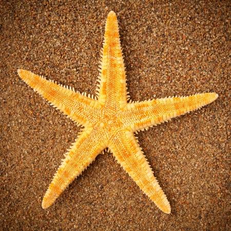 starfish or sea star on the sand photo