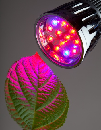 LED light for plant growing