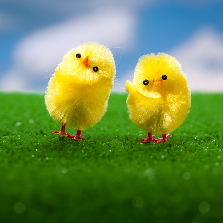 happy easter chicks on the grass photo