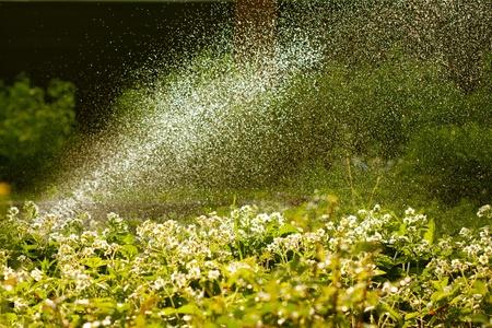 irrigate: Garden watering with water sprinkler