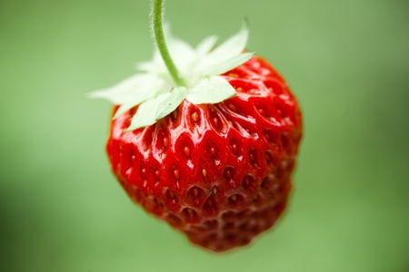 Fresh strawberry, natural green background photo
