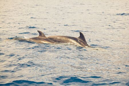 group of dolphins in the ocean photo