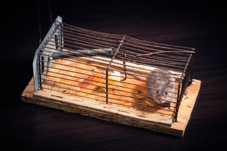 mousetrap: mice caught in the cage mousetrap  set free afterwards