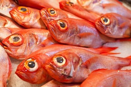 cod fish: ocean fish on ice