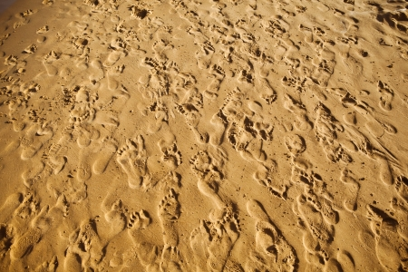trample: sand trampled with barefoot crowd