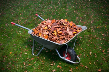wheelbarrow full of dried leaves photo