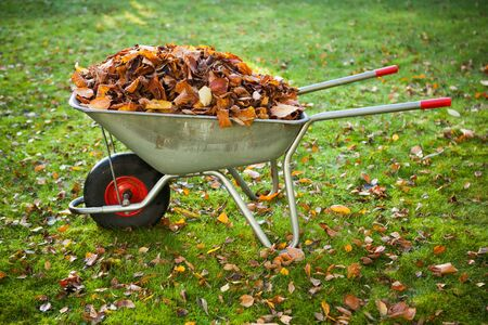 barrow: wheelbarrow full of dried leaves Stock Photo